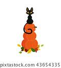 pumpkin with black cat 43654335