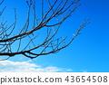 푸른 하늘, 파란 하늘, 하늘 43654508