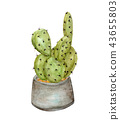 Cactus in pot. 43655803