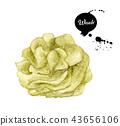 Wasabi isolated on white background 43656106