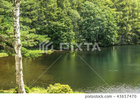 신슈 나가노 현 지노시 안쪽 蓼 科 하나님 射鹿 연못 43657470