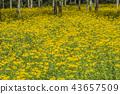 ดอกไม้,ไม้,โรงงาน 43657509