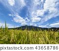 ท้องฟ้าเป็นสีฟ้า,เกษตรกรรม,เนินผา 43658786
