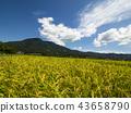 ท้องฟ้าเป็นสีฟ้า,เกษตรกรรม,เนินผา 43658790