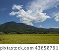 ท้องฟ้าเป็นสีฟ้า,เกษตรกรรม,เนินผา 43658791