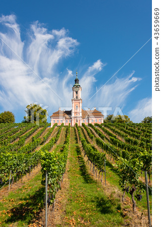 Vineyards and the pilgrimage church at Birnau 43659669