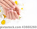 Beautiful woman french manicured hands 43660260