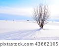 설원의 언덕 43662105