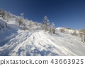 Exploring the Alps by tour skiing 43663925