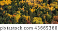forest, autumn, background 43665368