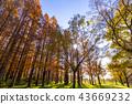 米祖莫托公園 水杉 楓樹 43669232