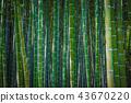 죽림, 대나무 숲, 대나무 43670220
