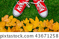 autumn, shoes, red 43671258