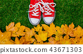 autumn, shoes, red 43671303