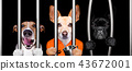 dogs behind bars in jail prison 43672001