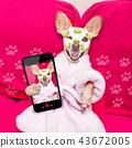 wellness beauty mask  spa  dog 43672005