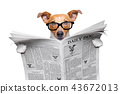 dog reading newspaper 43672013