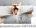 yawning dog in bed 43672019