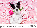 dog love rose valentines 43672022