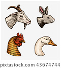 Farm animals. Head of a domestic goat cock goose rabbit. Logos or emblems for signboard. Set of 43674744