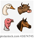 Farm animals and birds. Head of a domestic turkey gander cow. Logos or emblems for signboard. Set of 43674745