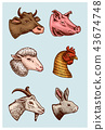 Farm animals. Head of a domestic pig goat cow rabbit sheep. Logos or emblems for signboard. Set of 43674748
