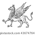 griffin, animal, myth 43674764