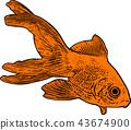 gold fish illustration 43674900