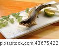 อาหารญี่ปุ่น,ปลา,ครัว 43675422