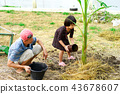 Grandfather and granddaughter grow tree together 43678607