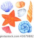 Shellfish and Starfish watercolor collection 43679882