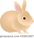 กระต่าย 43681067