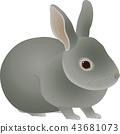 กระต่าย 43681073