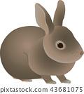 กระต่าย 43681075