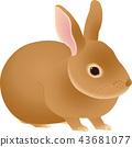 กระต่าย 43681077