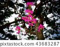 nature, natural, naturals 43683287