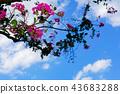 extend, lengthen, bloom 43683288