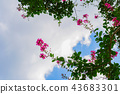 cloud, clouds, sky 43683301