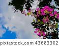 cloud, clouds, sky 43683302