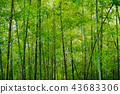 in the mountains, green, verdure 43683306