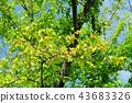 foliage, leaf, leafs 43683326