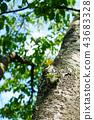 tree, wood, bud 43683328