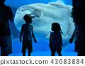 พิพิธภัณฑ์สัตว์น้ำ 43683884