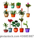 collection of the botanical plants in the pots 43685987