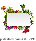 Frame Botanical Nature with the flowers accents 43685991
