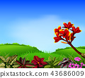 a fresh view with mountain and frangipani flower  43686009