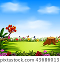the beautiful view with the blue sky and garden 43686013