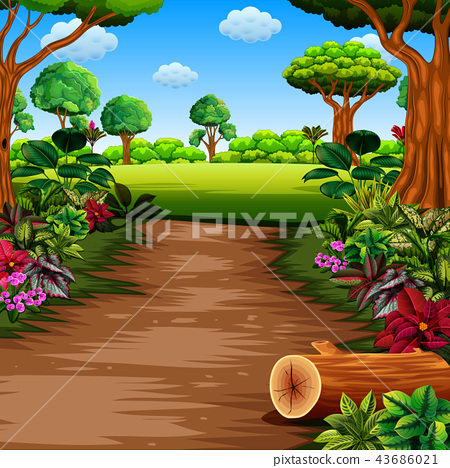 the forest with footpath and beautiful plants  43686021
