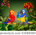 the beautiful parrots are talking on the stalk 43686084