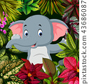 the cute pose of the baby elephant in forest 43686087